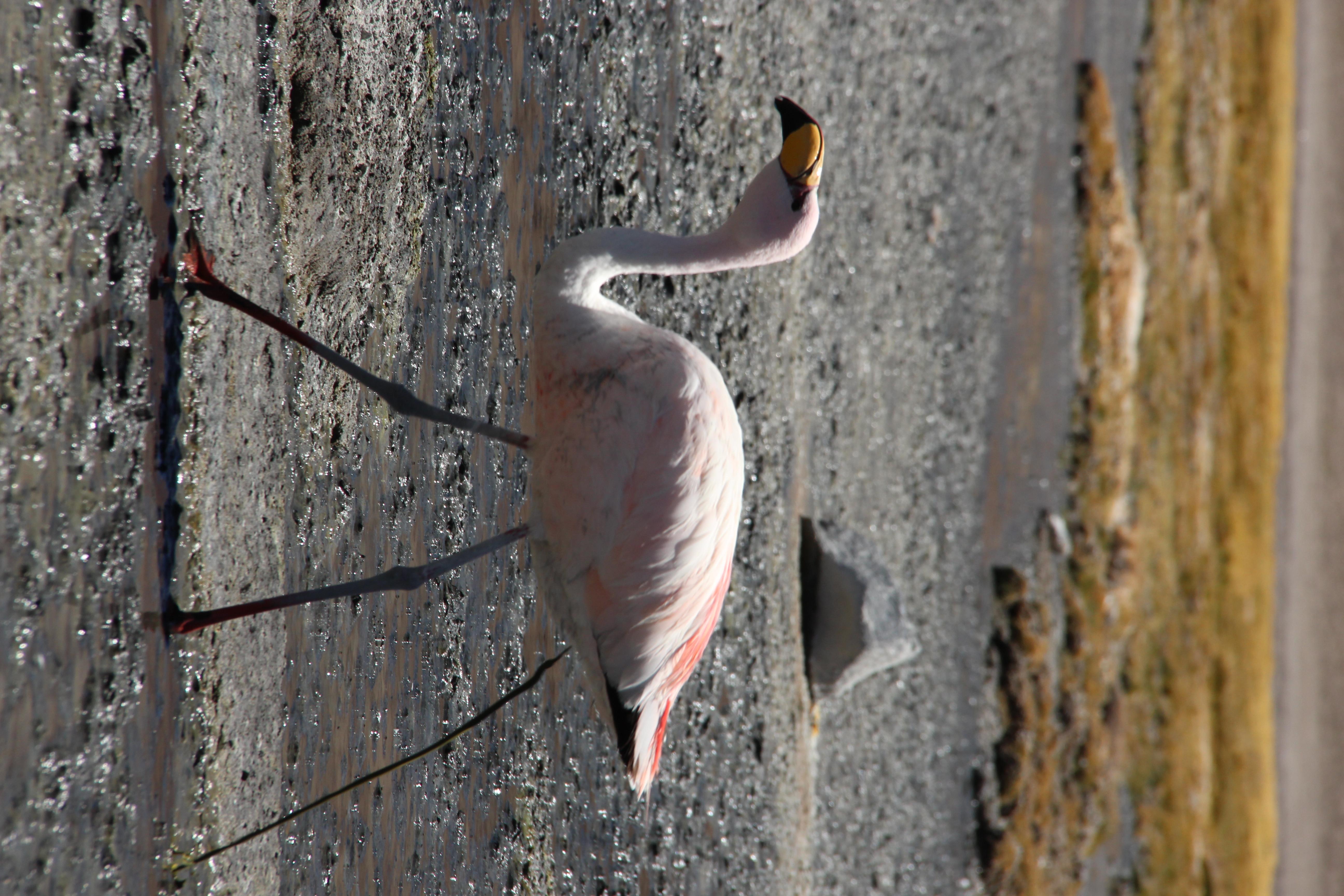 Defäkierender Flamingo. Dreh ich später noch richtig hin.